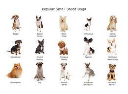 Kinds Of Dogs Chart Fluffy Dogs That Make Great Emotional Support Animals