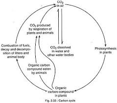 essay on the carbon cycle carbon cycle