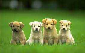 Dog Wallpapers - Top Free Dog ...
