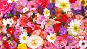 Official Birth Flower Chart Birth Flowers Meanings Birth Month Flowers Birth