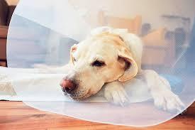 Auch der besterzogenste hund ist nun mal ein tier und kann unbeabsichtigt schäden verursachen. Hundeversicherung Vergleich Gunstige Tarife Auf Check24