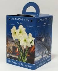 9191 white amaryllis gift box
