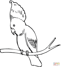 Small Picture Cockatoos coloring pages Free Coloring Pages