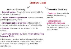 Thyroid Hormone Flow Chart Draw The Flowchart On The Function Of The Pituitary Gland