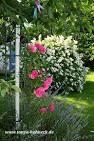 rote rose messel nippel verlängern