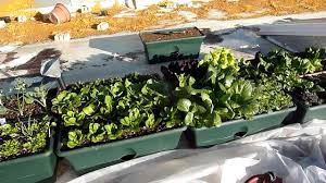 Rooftop Kitchen Garden Roof Top Winter Vegetable Garden Youtube