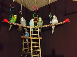 here s jen s full parakeet flock brian bowie ziggy mia the rev and syn