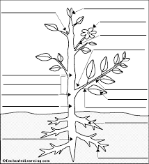 Small Picture plant coloring page pid Pinterest Anatomy Plants and