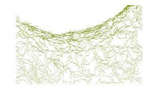 vitra  algue