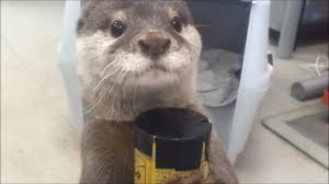 Otter Vending Machine