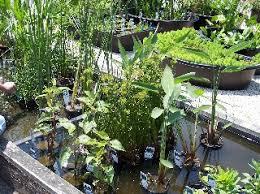 garden pond supplies. Garden Pond Supplies E