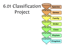 Blue Jay Robin Cardinal Finch And Pelican Taxonomy Chart 6 01 Classification Project By Patrick Truelove On Prezi