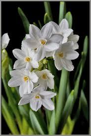 White Paper Flower Bulbs Mic Uk Test