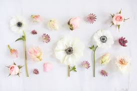 Minimalist Flower Computer Wallpapers ...