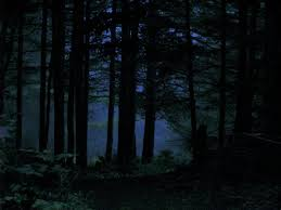 camping in the woods at night.  Woods Intended Camping In The Woods At Night S