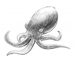 Small Picture How To Draw an Octopus Step by Step on We Heart It