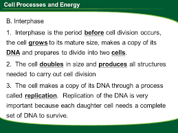 Cell Organelle Worksheet Answers - Switchconf