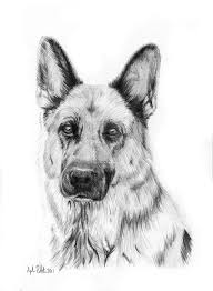 realistic dog drawing step by step. Modren Drawing Learn To Draw A German Shepherd Puppy Dog Step By Easy For Beginners   Rock Draw On Realistic Dog Drawing Step By D