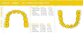 Tooth Eruption Chart Bayou Childrens Dental