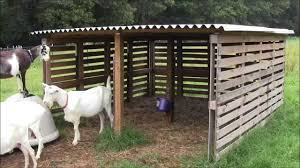 our goat shelter using free pallets