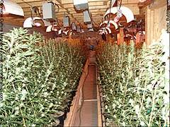 basement grow room design. Cool Design Ideas Basement Grow Room Simple Design. D