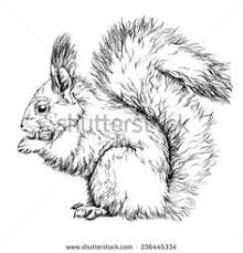 Unique Red Squirrel Coloring Page Tintuc247me
