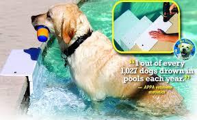 paws aboard dog pool ramp