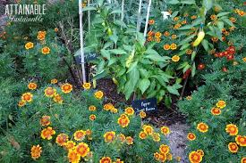 companion planting with herbs for a