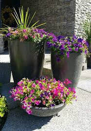 large cement planters. Beautiful Flowers In Cement Planters Large
