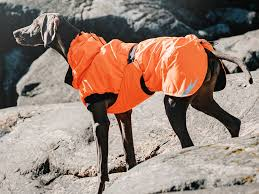 The Best Snow Jackets For Dogs Business Insider Business