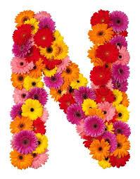letter n flower alphabet isolated on white background stock photo