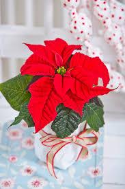 Floradaniadk Adventsdekoration Im Eigenen Stil