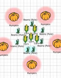 Companion Planting Chart Uk Companion Planting Three Sisters Garden Plans