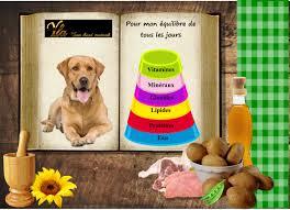 meilleures croquettes pour chien allergique