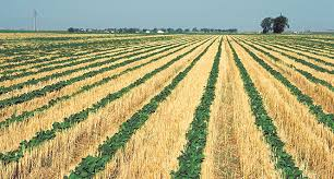 Image result for image of no till farming