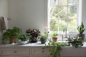 indoor plants is an oxymoron the most important thing to know about plants they prefer to live outdoors you will never see a botanical description that