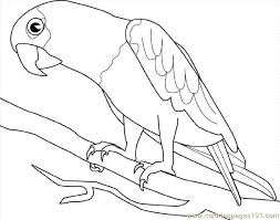 parrot coloring pages printable free printable coloring page parrot birds parrots