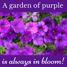 Purple Flower Quotes 11 Purple Quotes To Share With Those Who Love Purple Purpleologist