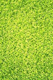 A Lime Green Shag Rug Area Rugs Premium