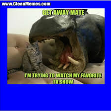 clean memes the best the most online clean memes and images my favorite tv show acircmiddot myfavoritetvshow