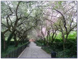 Image result for central park conservancy garden