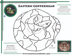 Lare Coloring Pages Amphibians And Reptiles Of Louisiana