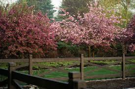 Garden Web Kitchen Janice Parker Landscape Architects