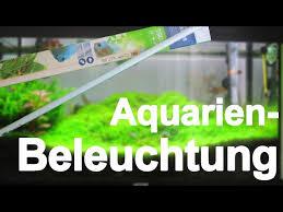 Aquarium Beleuchtung   AquariumBasics #7   YouTube