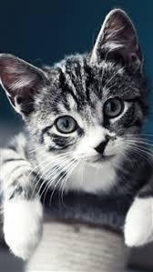 cat wallpaper iphone 5.  Cat 3128 186 Cute Baby Cat IPhone 5scse Wallpaper To Wallpaper Iphone 5 R