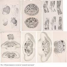 Вклад Н И Пирогова в развитие анатомии и мировой хирургии Н И  d olya реферат пирогов 6 png