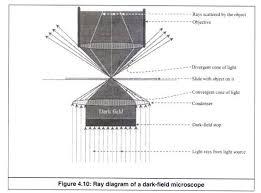 dark field microscopy the working of dark field microscope with ray diagram with figure