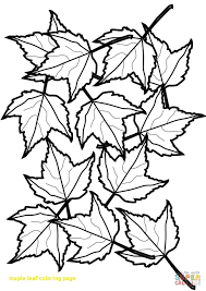 maple leaf coloring page bookmonte me and leaves at maple leaf coloring page