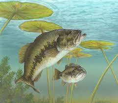 file largemouth bass painting jpg