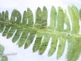 removing the leaf bits close up of removing leaf bits